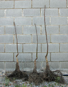 Planta de vivero tradicional